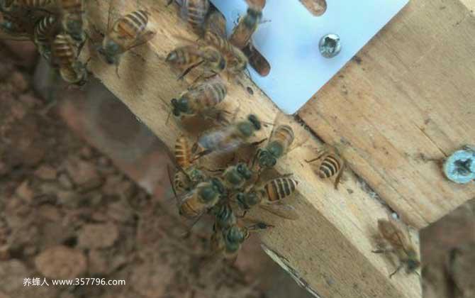 农村土蜜蜂多少钱一箱?