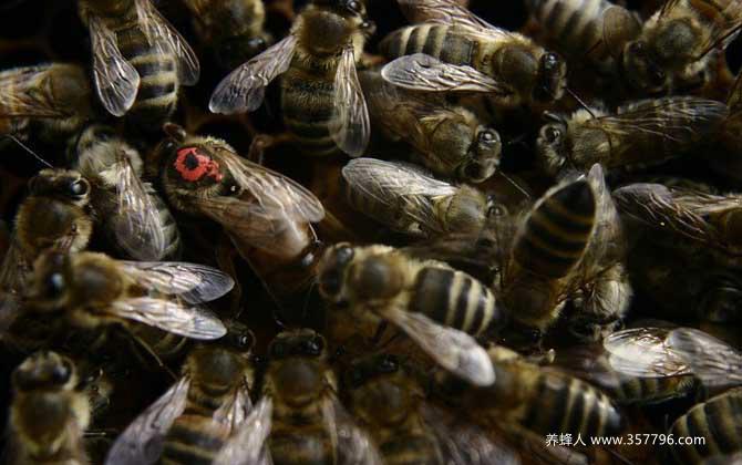 """蜂群不但分工明确,甚至食物都不同,""""等级森严""""令人大开眼界!"""